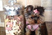 Home Made  Dog Treats / Special treats for my dogs / by Tamera Howell