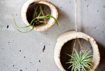 air plants - ways to display air plants / Are you drawn in by air plants?  We are.  And there seems to be no limit to the creativity of air plant holders and containers.  We want to see them all... www.woodendeckle.com