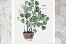 botanicals:  botanical art ideas for home decor / Botanical inspiration for handmade paper projects, as well as botanical art ideas for home decor and every day life.  At www.woodendeckle.com we love everything botanical!
