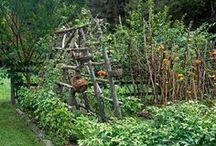 garden ideas / by Titta Sipinen