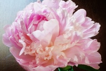 Peonies and other Beautiful Blooms