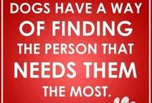 Dogs&Other Animals