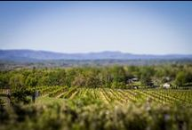 Explore the Vineyard / We take great pride in our more than forty-two sprawling acres of vines at Raffaldini Vineyards.