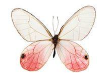 Butterfly / by Alessandra Zecchini
