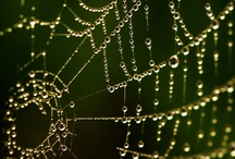 Dew|Raindrops  / by Heather D.