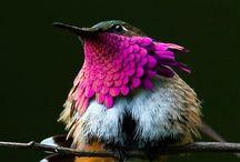 Pássaros / Birds