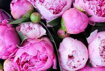 Flowers & Herbs / by Ellie Hanson