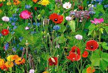 Garden / by Mo Boenigk