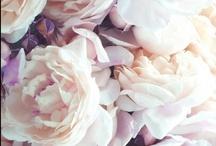 La Flor / by Suzy Florentina