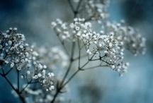 flora / by Jennifer