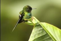 Small Birds / Gentle, miniature, and just plain cute! / by Alaina Burnett