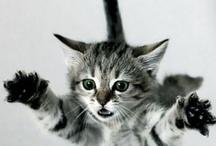 Kitty Kats / by Debra Wills