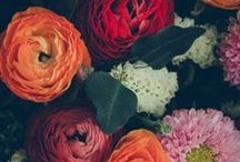Garden / I'd rather have roses on my table than diamonds on my neck. Emma Goldman