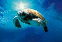 Things to Do at SeaWorld® Orlando