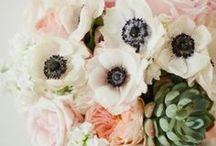 Anemone Love