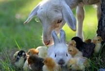Easter / by Brenda Buschmann