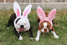 DOGS: Easter Bunny Auditions / A collection of Easter Bunny dog photos that make me smile. Let's pretend these adorable dogs are auditioning to be the next Easter Bunny. Which contestant is your favourite? #Easter #Dogs