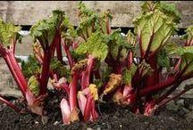Garden / Growing Info / by Lisa Rauter