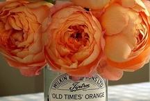 Floral Oasis / by Lauren Moore