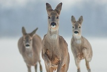 wild nature / by Marianne Angvik