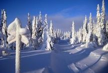 Lapland / Northern Lights, snow covered forests, saunas and snowmobiles -  discover the beauty of the Scandinavian Arctic!