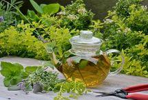 Tee aus dem Garten / Der Tee Garten - Sammeln und Trocknen rund ums Jahr