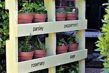 Flora - Living Design / by Karen Murphy
