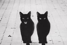 gatti - I love cats!