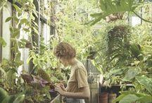 Little Garden Studio / Inspiration for the little garden studio