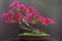 Bonsai! / by Bridget Kelly