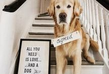 Puppa Love
