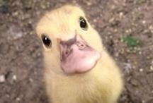 It's so Fluffy!!! / by Stephanie Llanes