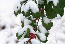 A Winter Wonderland ~ 2 / by Donna Kruder