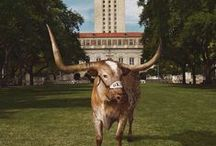 Longhorn Football / by Jessica Crawford