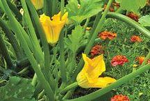Gardening / Plants / Sustainability