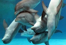 Dolphins / by Donna Kruder