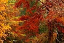Autumn Leaves / by Donna Kruder