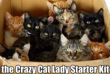 Crazy Cat Lady / by Emily Wardrop