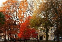 Autumn Bliss / Autumn Bliss / by Patricia McCullough