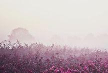 theme   nature.