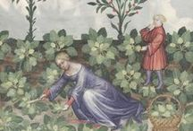 Harvest - Tacuinum Sanitatis / On this board we highlight profusely illustrated pages of a medieval handbook, called Tacuinum Sanitatis. The book focuses mainly on health describing in detail foods and plants. More images can be found on our portal www.europeana.eu.