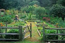 Allotment / by Sandy Wood
