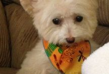 ADORABLE PETS / Cute puppies, dogs, kitty's etc / by Brenda Pouncey