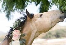 adorable animals / by Audrey Pelczynski-Yassine