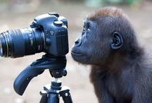 ZSL Animal Photography Winners 2012