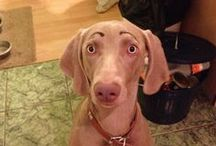 Dogs With Eyebrows / www.petnook.in
