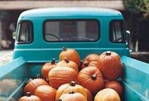 All Things Pumpkin / by Diane Linkert