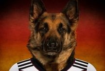 Dogs in the uniform of their national football teams / As a lead-up to the 2014 FIFA World Cup in June, animal stock photography website Life on White recently photographed the most representative dogs from countries around the world dressed in the uniform of their national football team. The dog breeds featured in their 'Soccer Nations Dogs' project ranged from a French Bulldog, a Portuguese Water Dog, a Siberian Husky, a Japanese Akita Inu and a Brazilian Mastiff. | www.petnook.in