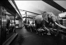 Animals Take Over the Paris Metro / Next time you complain about the sweaty guy breathing down your neck during your morning commute, just be glad an elephant isn't cramping the car. They probably lean on the subway poles like jerks. Photographers Thomas Subtil and Clarisse Rebotier have imagined in their surrealist series what the Paris metro would look like if it had just as many animals using it as people.  The playful photography imagines a world in which animals and humans can live in perfect harmony.  | www.petmook.in
