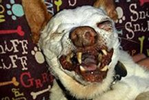 Contestants of the World's Ugliest Dog Competition / Forget beauty pageants! This Friday, all eyes will be on the most unattractive pooches at the World's Ugliest Dog competition at the Sonoma-Marin Fair in California.  Beauty is certainly in the eye of the beholder in this competition and judges will decide what overbite, toothy smile, or crazy-haired mutt will win the $1,500 prize.  | www.petnook.in